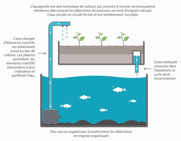 Schéma du cycle de l'aquaponie